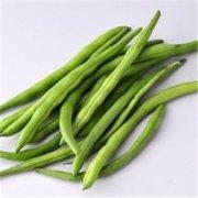 四季豆的营养价值 四季豆的营养价值有哪些