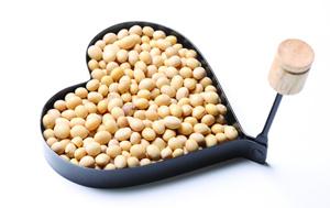 黄豆的营养价值 黄豆的营养价值有哪些