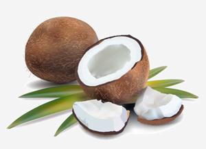 椰子的营养价值 椰子的营养价值有哪些