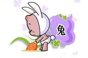 A型血属兔的人性格